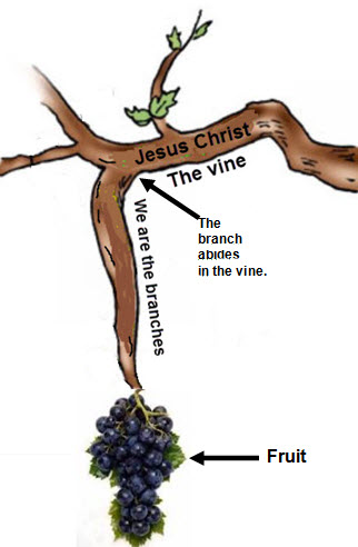 John-15-5-vine-and-branches2